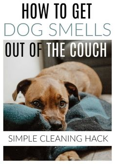 19 best dog smells images cleaning cleaning hacks cleaning tips rh pinterest com