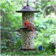 Bird Feeder Fill