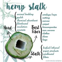 Our focus is to educate on the power of hemp and CBD through quality, engaging content. We support the legalization of cannabis and are advocates for the development the industry worldwide. Ganja, Hemp Oil, Medical Marijuana, Agriculture, Farming, Weed, The Cure, Herbs, Conservation