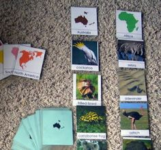 It is the two sets of cards described in Gettman for classifying animals. There are two sets of cards with the same 92 animals in each. In one set, the animals are classified by continent (6 continents), and in the other, they are classified by class (mammal, fish, bird, reptile or amphibian).