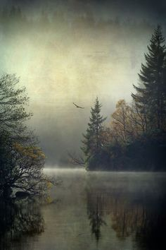 "Stunning foggy landscape in Scotland, ""Land of the Raptors""... by David Mould."