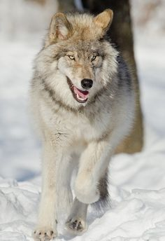 Picture by Maxime Riendeau