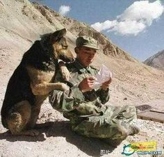memorial day dogs and their soldier | In honor of our soldiers (and their best friends).
