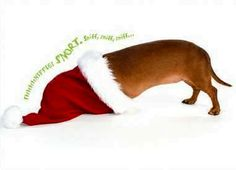 *snortsnortsnort* They'll try to burrow into ANYthing! #dachshunds #Christmas