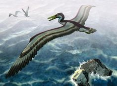 """astronomy-to-zoology: """" Genus Dasornis Dasornis was a genus of pseudotooth birds that appeared in Eocene Europe. Dasornis was quite large with a wingspan the size of a small plane ranging from 16-20 feet. Currently there is only one accepted species..."""