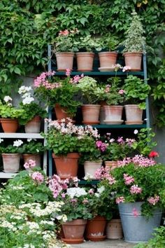 Great use of space for potted plants!!! Bebe'!!! Great container garden!!!
