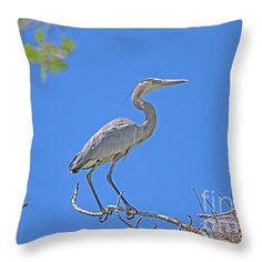 """Great Blue Heron Nesting In Western Colorado"""
