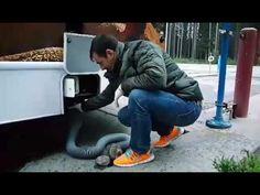 Como funciona o esgoto do motorhome | Felipe, o pequeno viajante
