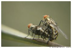 Mating Tym...  Macro Photography...!!