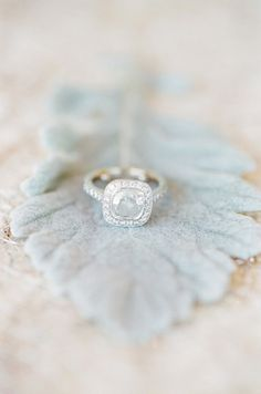 ring shot idea (DUSTY MILLER - Cineraria maritime) - Miami Parisian-Inspired Wedding from KT Merry Photography