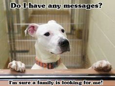 Do I have any messages? I'm sure a family is looking for me!