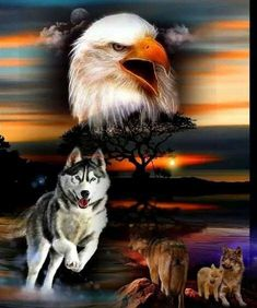 Eagle and wolf in field Native American Wolf, Native American Paintings, Native American Pictures, Eagle Images, Eagle Pictures, Wolf Pictures, Eagle Wallpaper, Wolf Wallpaper, Wildlife Paintings