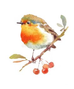 Robin Bird And Berries Watercolor Illustration Hand Drawn Stock Illustration - Illustration Of Beautiful, Drawn: 63225670 Watercolor Red, Watercolor Animals, Watercolor Cards, Watercolor Flowers, Watercolor Paintings, Simple Watercolor, Tattoo Watercolor, Watercolor Ideas, Watercolor Techniques