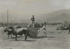 A farmer stands on a wagon pulled by oxen; another holds a pitchfork-Fred Boissonnas-Olympos, Karpathos, Greece National Geographic Images, Frederic, Rich Image, Great Photographers, Photo Library, Image Collection, Royalty Free Photos, Old Photos, Vector Art