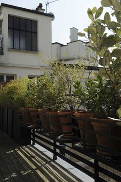 Rue Saint Honoré, Roof Top, Plants, Green, Projects, Rooftop Terrace, Plant, Planets