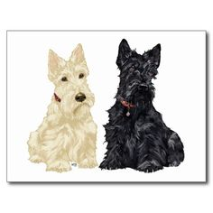 Wheaten and Black Scottie dogs, created from my original artwork, and available on various clothing, novelty and gift items!  Buy for yourself or that special Scottie loving friend !  Aroooo!