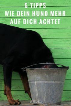 #Hund || Hunde || Erziehung || wissenswert || achtet || Tipps || Ideen || Bilder