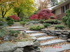 This ornamental specimen landscape, rock garden, Pa. colonial boulder retaining wall and natural large slab blue stone staircase is in Upper Saddle River, Bergen County, NJ.  The landscaping combines red Acer palmatum dissectum (weeping cutleaf japanes maple) in variety along with Chamaecyparis obtusa 'Nana' (dwarf hinoki cypress) in variety, Tsuga canadensis 'Cole's Prostrate' (prostrate weeping hemlock), Tsuga canadensis pendula 'Sargentii' (weeping sargent hemlock) and Chamaecyparis…