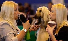 Hands down the best photo ever taken at a dog show. pic.twitter.com/ouKlVbiK24