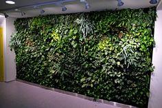 Een eyecatcher voor ieder bedrijf, een plantenwand in de hal. #groenewand #bedrijfspositiviteit