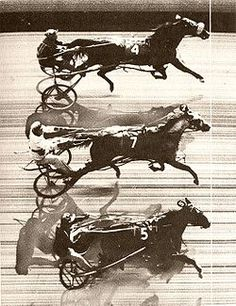The first ever triple dead heat. Interesting...