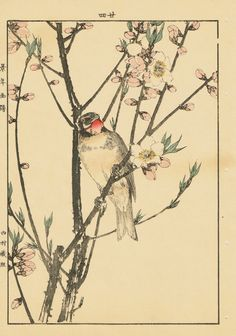 "Japanese Antique Original Woodcut Print Imao Keinen ""Peach Blossom"""