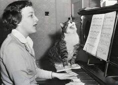 Sing loud kitty.