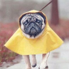 Pug Poncho!#Repin By:Pinterest++ for iPad#