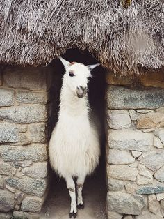 {take me away № 42 :  the most beautiful countryside retreats in peru} by {this is glamorous}, via Flickr