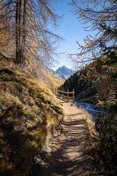 Der Schweizerische Nationalpark mit seinen gelben Lärchen bietet im Herbst ein spektakuläres Farbenspiel. Aber die Wanderung zur Alp Trupchun im Val Varusch lohnt sich nicht nur deswegen.  #Wandertipp #SchweizerNationalpark #Engadin Places To Visit, Hiking, Country Roads, Nature, Travel, Ursula, Forests, Landscapes, Blog