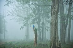 Photo Morning Melody - II by Bobby Joshi on 500px