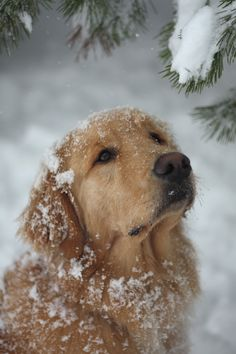 Like Watson playing in the snow