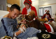 Lily, a 5-year-old miniature Appaloosa horse, kissed Alec Zeng, 16,  as a Pet Partners, looked on at Floating Hospital for Children at Tufts Medical Center in Boston. #PetPartners