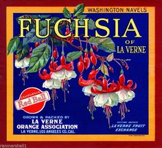 La Verne Fuchsia Flowers #2 Orange Citrus Fruit Crate Label Art Print #Fuchsia
