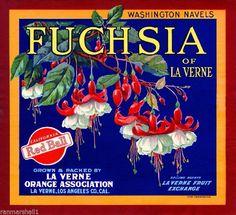 La Verne Fuchsia Flowers #2 Orange Citrus Fruit Crate Label Art Print #Fuchsia