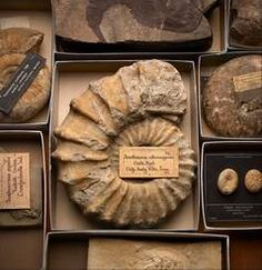 At the time of the 1893 World's Fair, the sciences were rapidly developing. But it wasn't until after the fair that the full scientific significance of specimens like these fossils was realized. Learn about this and more at the Field Museum's new exhibit.
