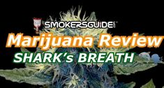 BushDoc Marijuana Review: SHARK'S BREATH from Grey Area Coffeeshop Dna Genetics, Education Information, Shark S, Medical Facts, Childproofing, The Hard Way, Just Smile, Natural Light, Good Movies