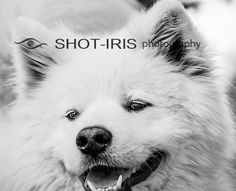 Digital photo download printable file  Animals HQ No 3 by Shotiris