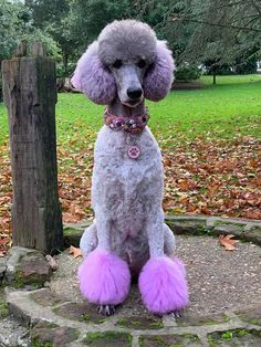 Our semi-permanent pet hair color can be used on cats and dogs. Comes out with around 8 washes. Poodle Grooming, Pet Grooming, Grooming Salon, Poodle Cuts, Dog Grooming Business, Puppies And Kitties, Pink Dog, I Love Dogs, Animals Beautiful