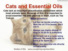 Young Living Essential Oils: Cats