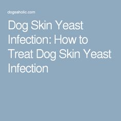Dog Skin Yeast Infection: How to Treat Dog Skin Yeast Infection