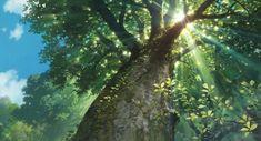 Kazuo Oga, Arbres et forêts