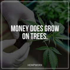 **IMPROVE YOUR SKIN, HEALTH & WEALTH!** Capitalize on the emerging 7.1 billion dollar industry. CBD Hemp oil is taking off as more people gain awareness of its many benefits. Lab tested and legal in all 50 states. Don't miss out on this life changing opportunity. **TAKE THE FREE TOUR!** @: www.gainfulhemployment.com