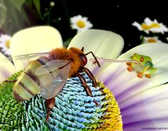 Bee and brave frog 3ds Max Vray, Photorealism, Portfolio, New Work, Brave, Awards 2017, Gallery, Artwork, Flowers