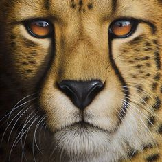 Peter Höhsl - Portrait of a Cheetah - 30 x 40cm - Oil on canvas.