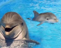 Baby dolphin learning from mom #dolphin @hpman