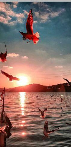 Lakeside Living, Istanbul