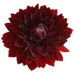 Cranberry Antique Enhanced Hydrangea
