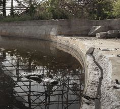 The abandoned Six Flags theme park around New Orleans now has alligators in its pools.