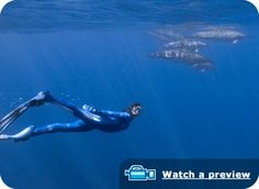 "Blue Ocean Film Festival - Best Ocean Exploration & Adventure:  2010 ""Jean-Michel Cousteau Ocean Explorations: America's Underwater Treasures"" - by Ocean Futures Society"